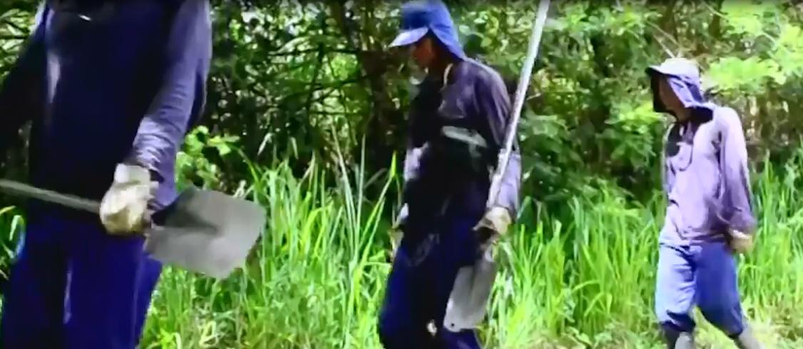 Cerca de 7.400 hectáreas de coca han sido erradicadas en Antioquia
